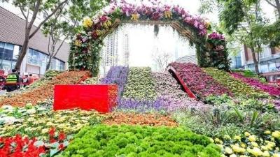 深圳春节设近3200个购花档,开办时间不晚于2月4日