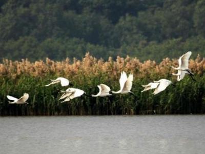 河南省将新建27处省级湿地公园,湿地保护修复速度加快