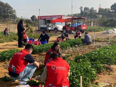 光明马山头社区开展果蔬采摘活动鼓励企业员工留深过年