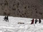 零下20摄氏度 青海生态管护员从冰河中救出6只被困白唇鹿