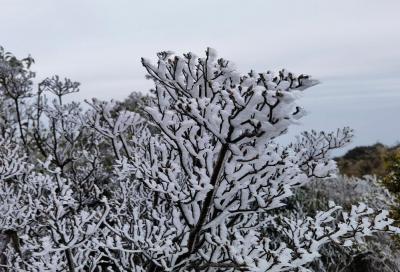 今天深圳到底多冷?梧桐山杜鹃树都挂上了冰