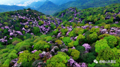 梧桐山十里杜鹃灿若云霞,深圳首个生态景观林抚育地方标准发布