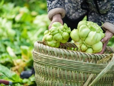 中国榨菜指数平台在重庆发布 推动榨菜产业上下游快速发展