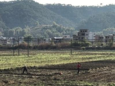 饮水思源,肇庆返乡大学生投身家乡发展