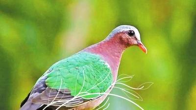 你造吗?在深圳的鸟儿竟然还有这些秘密……