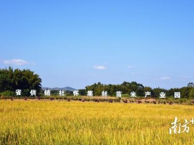 打造六大百亿农业产业集群,肇庆金秋9月瓜果飘香